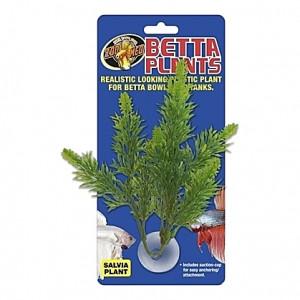 Plante salvia sur ventouse