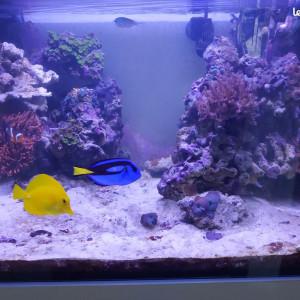 Aquarium récifal Elos system 70 Diamond Line 210L + meuble, vide