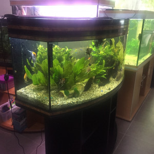 Suite à décès vends à petits prix aquariums poissons Doué la Fontaine sur Rdv