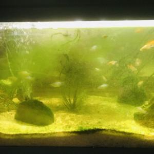 Aquarium et poissons