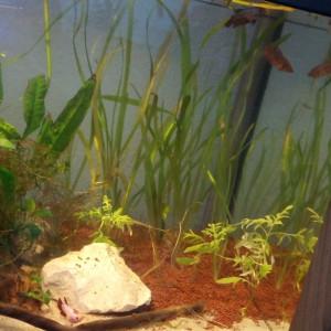 Récupère si vous jeter plantes.racines.chauffage.aquariums