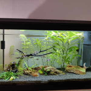 Aquarium 60L Juwel complet accessoires et vivants - communautaire