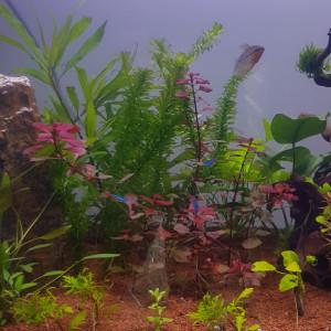 Matériel aquarium - bonnes affaires ; chauffages, décorations