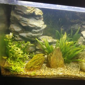 Aquarium Juwel 240 hyper complet plus bouquins