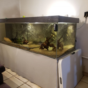 Grand aquarium 1000L + Poissons