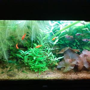 Aquarium 180l Juwel avec poissons et plantes