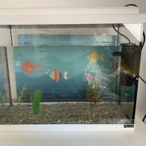 Aquarium 50L avec filtre