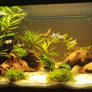 cherche aquariums