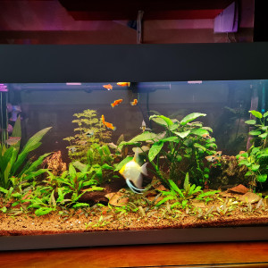 Vend aquarium ferplast Dubai 100 (190l net)