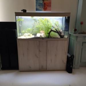 Aquarium 220l complet équipements + poissons
