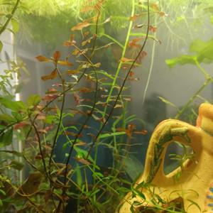 Plantes originales  aquarium