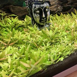 Plante / Boutures Aquarium