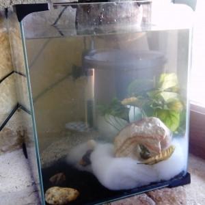 aquarium 20L complet