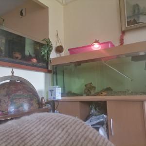 Vend Aquarium 250