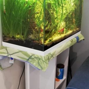 Aquarium complet 60 litres