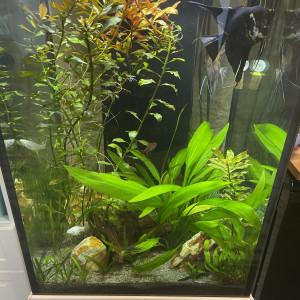 Aquarium aqualantis 120lt