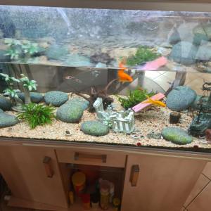 Aquarium RENA 360L