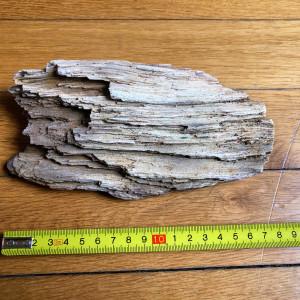 Pierres issues de bois pétrifiés et fossilisés