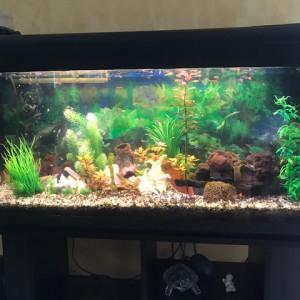 Aquarium tout équipé et habité