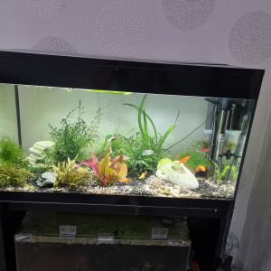 Aquarium + meuble Askoll pure led XL 90L