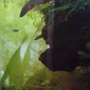 Reprise d'Aquarium, suite à déménagement futur
