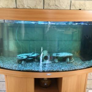 Aquarium Juwel Vision 180 litres avec son meuble et tous ses accessoires