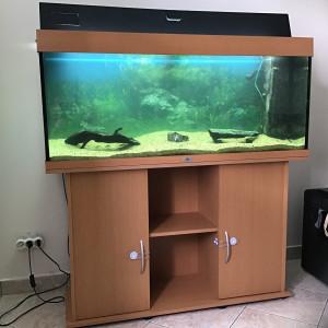 Aquarium juwel Rio 240l +meuble
