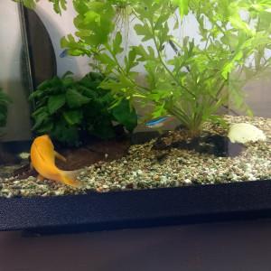 Donne poissons Epinal