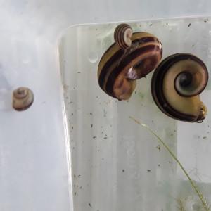 Vends ou échange escargots marisa