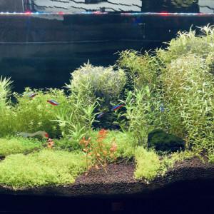 Vente Aquarium complet ou au détail