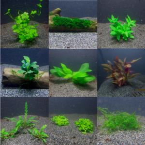 divers plantes aquarium  en pots, sur bois, mousses
