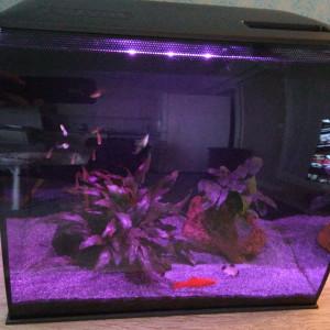 Aquarium Fluval Flex avec poissons, plantes, etc