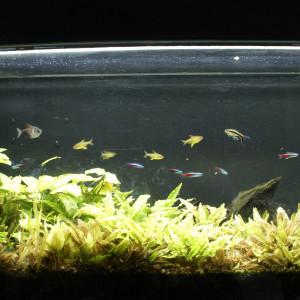 Aquarium 240l + poissons + plante