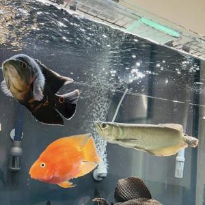 voir du poisson
