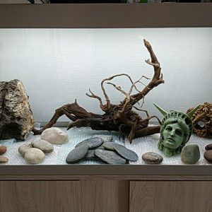 Aquarium Eheim 240 litres  et ses accessoires