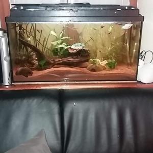 Aquarium 100l