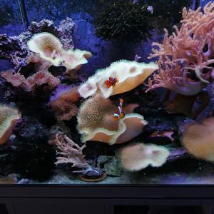 DONNE mes coraux mous plus les pierres vivantes