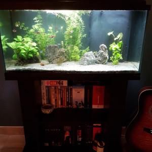 Vends aquarium Aquatlantis 96l tout équipé + poissons et plantes