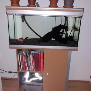 Aquarium 150 litres tout équipé