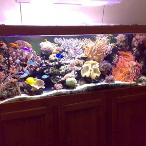 Aquarium incurvé 200*70*70