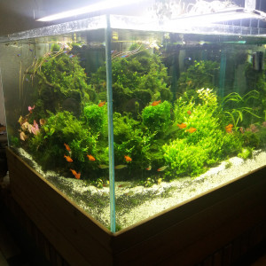 aquarium 600L et 800L