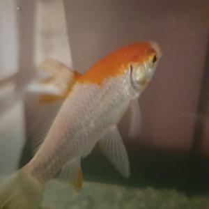 Donne poisson rouge contre bon soin