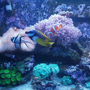 Aquarium red sea 250