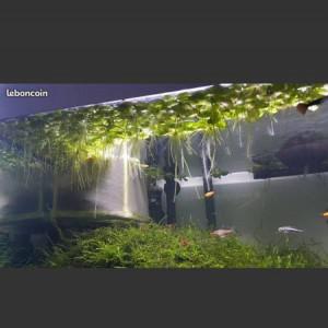 grenouillettes plantes aquarium