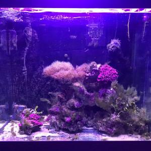 Divers poissons marins et pierres vivantes