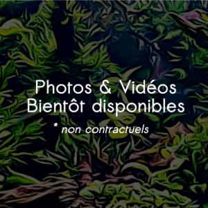 """Tete de lion noir velour """"aa"""" (17 à 19 cm)"""