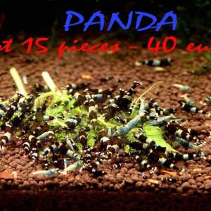 Lot 15 crevettes / PANDA /pour 40 €