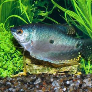 poisson d'eau douce plante escargot a vendre ou a echanger