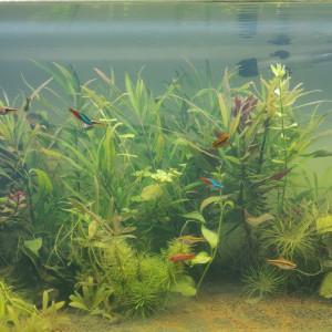 aquarium 100 L complet