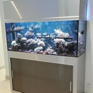 Aquarium Récifal complet de 450 litres